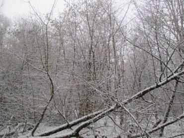 Es schneit, es schneit …